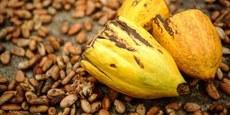 Festival do Chocolate em Ilhéus: mais de R$ 10 milhões e sucesso de público