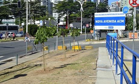 Salvador dá início ao georreferenciamento de árvores
