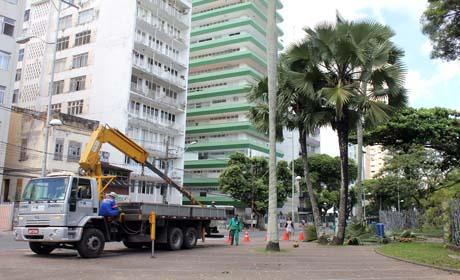 Cinco mil podas de árvores são realizadas por mês em Salvador