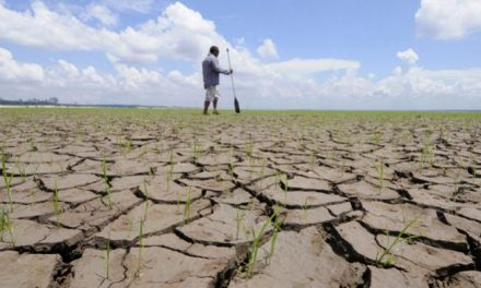 Governo decreta situação de emergência em 173 municípios afetados por estiagem