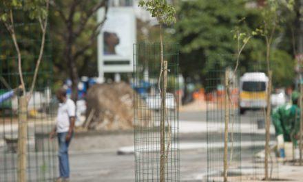 Manual de Arborização aponta espécies ideais para calçadas em Salvador