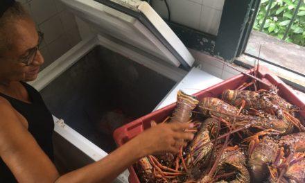 Operações vão proteger defeso de peixes e crustáceos