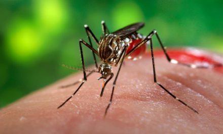 Prefeitura de Salvador intensifica combate ao Aedes para o carnaval 2018