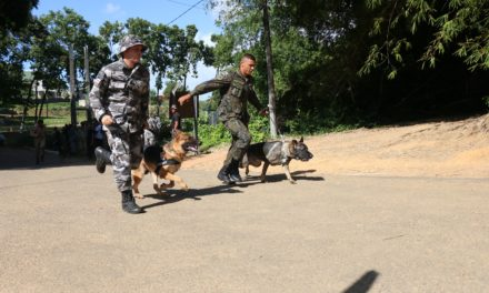 Competição entre cães integra forças de segurança