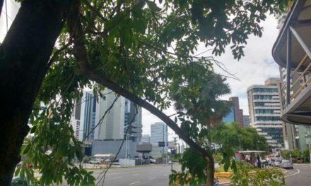 Prefeitura remove galho de árvore no circuito do Carnaval após ação de vandalismo