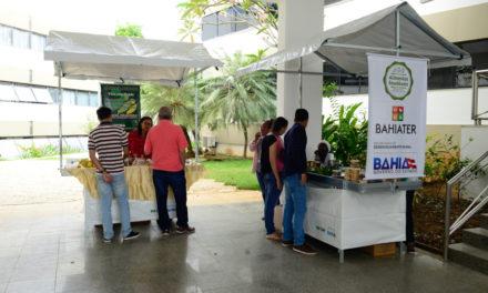 Mutirão da Bahiater garante direitos aos agricultores familiares 
