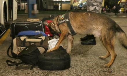 Cães farejadores realizam ações surpresas na Rodoviária e Ferry