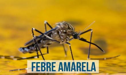 Salvador inicia campanha de vacinação com doses fracionadas contra febre amarela