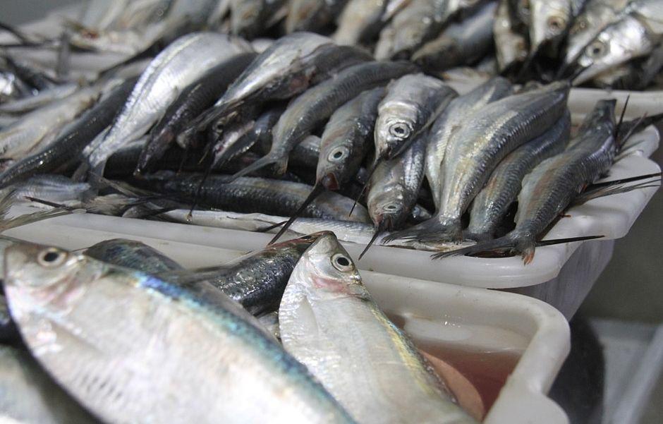 Ribeira recebe feira de peixes com até 40% desconto