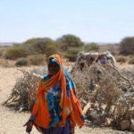 Eventos climáticos extremos geraram gastos de US$ 320 bilhões em 2017, diz ONU