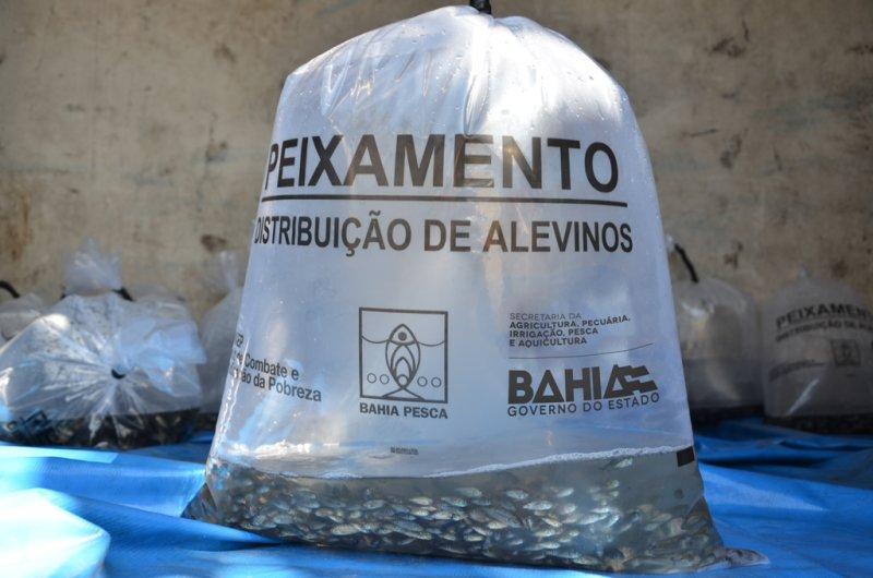 Produtores rurais de Paratinga recebem 30 mil peixes