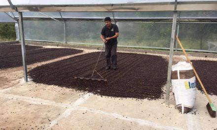 Produção de café da agricultura familiar na Bahia conquista mundo