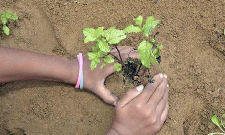Hortas públicas promovem interação entre comunidades de Salvador