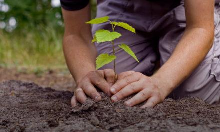 Prefeitura inicia plantio de árvores em Fazenda Coutos e Cajazeiras nesta quinta (26)