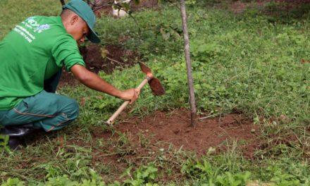 Salvador inicia operação de plantio de 7 mil árvores em espaços públicos