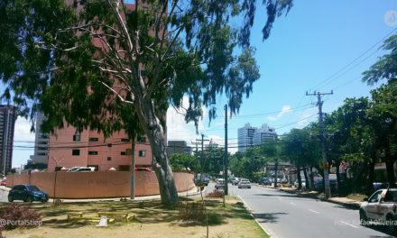Stiep receberá plantio de 35 árvores