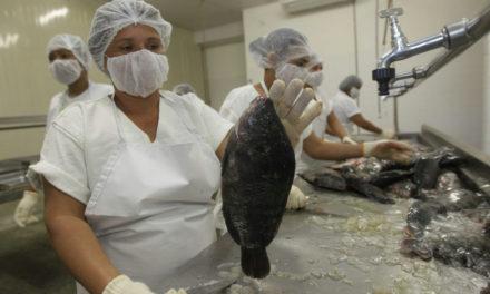 Pescadores recebem curso gratuito de manipulação do pescado