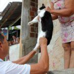 Salvador tem 47 mil cães e gatos vacinados em 16 dias de campanha