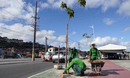 Suburbana Verde ultrapassa meta de plantio antes do prazo previsto