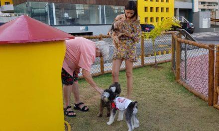 Dog Park é opção para proporcionar lazer a cachorros
