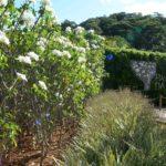 Salvador mantém áreas verdes para chegada da Primavera