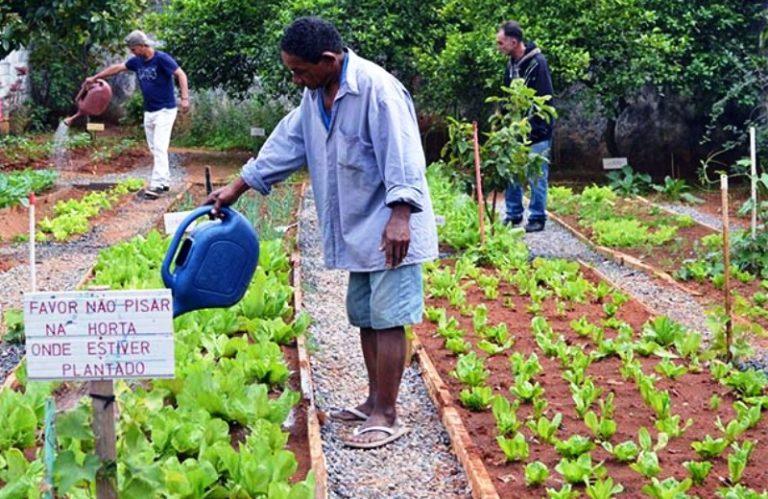 Salvador ganhará mais duas hortas comunitárias nesta semana