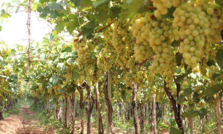 Empreendimentos de energia solar e produção de uva aquecem economia no Vale do São Francisco