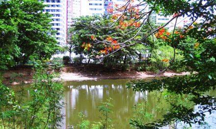Prefeitura apresenta projeto de revitalização da Lagoa dos Patos